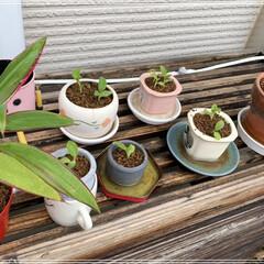 ホトトギス/お庭 いろいろ植え替えてあげました (1枚目)
