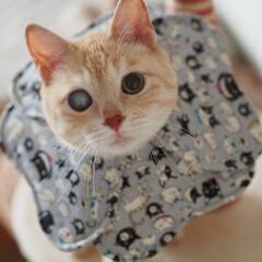 ペット/猫/にゃんこ/手作りエリカラ/手作り 福の新しいエリカラにゃよ♪(1枚目)
