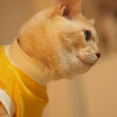 抗がん剤治療/放射線治療/皮膚型リンパ腫/元保護猫/福ちゃん 福ちゃんは皮膚型のリンパ腫と闘ってます。…(3枚目)