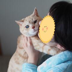 ペット/にゃんこ/猫/耳の聞こえない猫/福ちゃん チュッ💋チュッ💋攻撃される福ちゃん(1枚目)