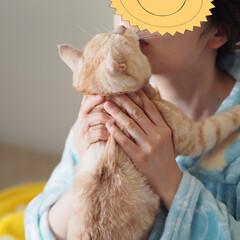 ペット/にゃんこ/猫/耳の聞こえない猫/福ちゃん チュッ💋チュッ💋攻撃される福ちゃん(2枚目)