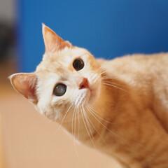 ペット/耳の聞こえない猫/猫/にゃんこ/福ちゃん そこで何してるにゃ?(2枚目)