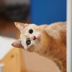 ペット/耳の聞こえない猫/猫/にゃんこ/福ちゃん そこで何してるにゃ?(1枚目)
