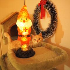 元野良猫/にゃんこ/保護猫/茶トラ/ペット/猫/...  (=^・ω・)ノ☆︎*Merry X'…(1枚目)