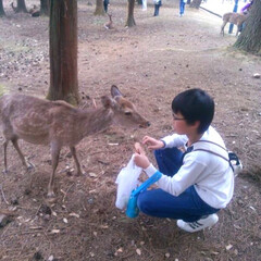 鹿/奈良公園/NARA/奈良/風景/旅行/... 奈良公園の鹿たちに会いに。 .  息子は…