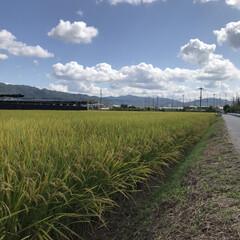 風景/秋/米農家さん/買い物時/暮らし 昨日スーパーの帰り 畑道の方を🚴♀️で…