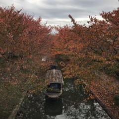 伏見公園/十石船/紅葉🍁 🚴♀️で5〜6分の所にある場所で 桜の…