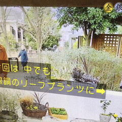 TVから/趣味の園芸/録画 こんにちは☀️ これってあり得ない映像じ…(1枚目)