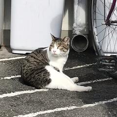 久しぶりの野良ちゃんフォット/暮らし/病院/野良猫 今日は月1の内科受診日で病院通いの日です…(2枚目)