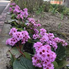 ダスキン配達日/暮らし 昨日配達日に可愛いお花が咲いていたよ パ…