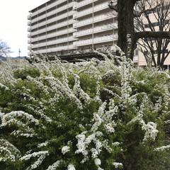 花/ダスキン配達時/暮らし 昨日のダスキンの配達時に 団地内公園 雪…