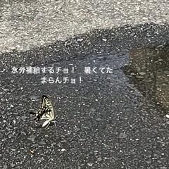 まき水/🍘/蝉の抜け殻 おはようさんです☀️毎日暑い 道路にまか…(1枚目)