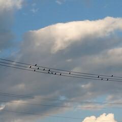 散歩/風景/電線/鳥/音符/おでかけ/... 音符みたい🎶 どんなメロディーになるのか…