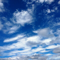 木の実/雲/空/おでかけ/暮らし/フォロー大歓迎