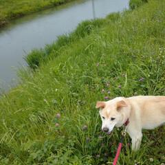 犬猫以外もいいぞ派/犬派/令和の一枚/フォロー大歓迎/LIMIAファンクラブ/LIMIAペット同好会/... 雨だって関係ないさぁ~😃🎶 お散歩🐶🎶