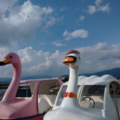 湖/スワン/おすすめアイテム/令和の一枚/フォロー大歓迎/LIMIAファンクラブ/... スワン色々🦢 スワンってことは白鳥? カ…
