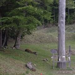 石/牛/丑/神社/山 地元の神社。 牛の像かな?と思ったら普通…(1枚目)