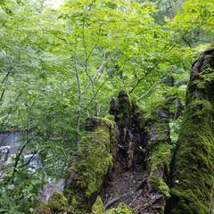 軽井沢/滝/ドライブ/令和の一枚/フォロー大歓迎/LIMIAファンクラブ/... 台風一過の日曜日。 静かな山奥の滝を見に…(4枚目)