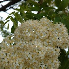 花/暮らし 白いお花💠(3枚目)