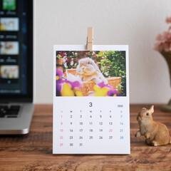 卓上カレンダー/うさぎ/フォロー大歓迎 2020年卓上カレンダーの販売を開始しま…
