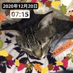 可愛い/寒い/布団/ねこ 3時頃に布団に入ってきて、爆睡してるネコ…