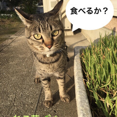 さんぽ/ねこ草/ねこ 夕方の散歩。  ねこ草、1袋で、ボーボー…(1枚目)