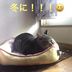 クッション/日向ぼっこ/ねこ 夏に買ったクッション!!! 初めて、入っ…