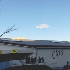 愛乃ももか🦄👧💕/🍘/cats/よろしくお願い致します/フォロー/今年/... 劇団四季Cats を観に行きました!面白…