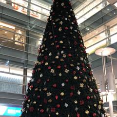 フォロー大歓迎/クリスマス/クリスマスツリー/風景/100均/ダイソー/... 小田急線相模大野駅の中央改札を出ると正面…(1枚目)