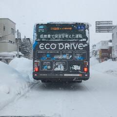 雪国あるある/積雪注意報 悪天候、一晩でどのくらい積もったのか😱 …