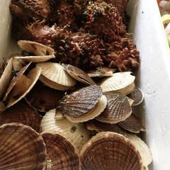 海鞘/ホタテ/令和の一枚/フォロー大歓迎/LIMIAファンクラブ/至福のひととき/... ⚓️朝一ホタテと海鞘頂きました。 残念……