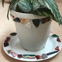 植木鉢/天然石/手作り/フォロー大歓迎/冬/ハンドメイド/... 🍀くっつけてみました。 LIMIA刺激で…