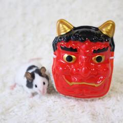 げっ歯類/パンダマウスおにぎり三姉妹/ネズミ/小動物/パンダマウス/フォロー大歓迎/... 鬼は〜外👹💦 マウスは〜内🐭🌼💕 ・ ち…
