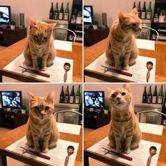 食卓/食欲の秋/ペット/猫 今宵のメインディッシュは、 あっしですよ…