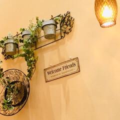 ライト/おでかけ/インテリア/グリーン/壁飾り ランチに パスタ🍝を 食べに行った お店…