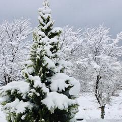 ツリー/雪/冬/風景 ❄️雪景色❄️ ✨❄️綺麗だなぁ❄️✨っ…