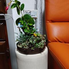 傘たて/サンパラソル 植木鉢を載せる台がなかったので😅 傘立て…