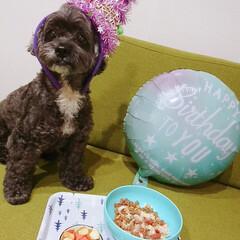 誕生日/フルーツたくさん/ペット/犬/おうちごはん/ごはん 僕の誕生日に大好きなフルーツ盛り合わせ貰…