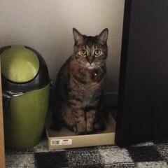 インテリア/猫/ペット 見つけた〜! (・・;) そんな所でどう…