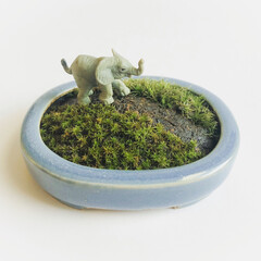 ミニチュア/動物/苔/苔ジオラマ/植物のある暮らし/植物と暮らす 7cmくらいの盆栽用の鉢に苔を植え付け、…