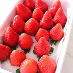 保存方法/いちご/グルメ/フード/スイーツ 苺の保存方法🍓 買ってきたら、密閉できる…