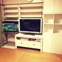 簡単/壁面DIY/IKEA/初心者/DIY/家具/... シングル生活10年目。 築48年古い団地…