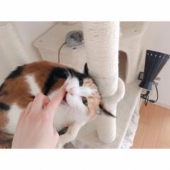 猫とワンルーム/猫と一人暮らし/猫と賃貸/猫とインテリア/猫との暮らし フルスイング  からの…(4枚目)