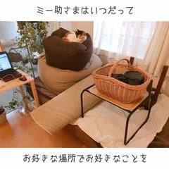猫と掃除/一人暮らしインテリア/猫との暮らし/猫とインテリア/猫と賃貸/猫と一人暮らし/... 掃除はいつも、ミーとの戦い。(7枚目)