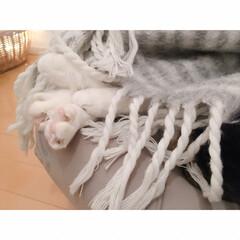 花束🐾/猫の寝相/猫との暮らし/猫とインテリア/猫と賃貸 響かないひとには  まったく響かない…(2枚目)