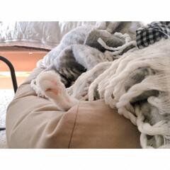 猫の寝相/猫と賃貸/猫とインテリア/一人暮らし/一人暮らしインテリア/ワンルームインテリア/... ソファーからいっぽん  可愛いててが  …(3枚目)