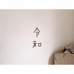 猫との暮らし/賃貸暮らし/一人暮らし/猫と賃貸/猫と1R/猫と一人暮らし/... 😊😸