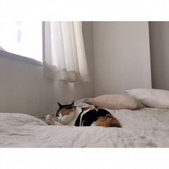 猫との暮らし/猫とインテリア/猫と賃貸/猫と一人暮らし/無印良品/うちの子ベストショット こっち(カメラ)を気にしながらも …(9枚目)