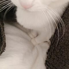 ワンルームインテリア/三毛猫のおんなのこ/三毛猫14歳/猫のいる部屋/猫との時間/にゃんこ/... 動かないので、試しに違うブランケットもか…