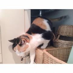 猫と一人暮らし/猫と賃貸/猫とインテリア/猫との暮らし 週に一度の掃除の日。 …(4枚目)